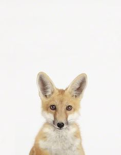 Fox #animal #photography #fox paint like makeup**