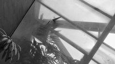 HH_ Planten un Blomen PHOTOGRAPHIE (C) [ catrin mackowski ]