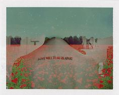 118 | Flickr - Photo Sharing! #poppies #color #love #polaroid