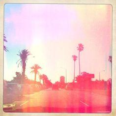 catrinat - #palms