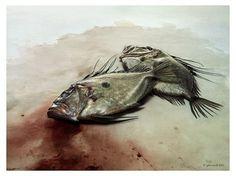 Collate #photo #fish