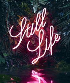 Still Life #photography #typography
