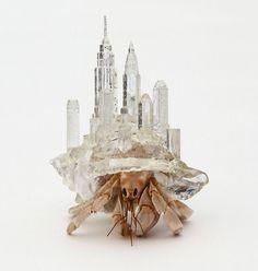 architecturally influenced hermit crab habitats by aki inomata