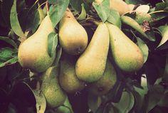 Fruita Blanch | Atipus #fruta #blancha #peres