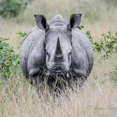 #cuteanimals: Wildlife Animal Portraits by Irene Nathanson