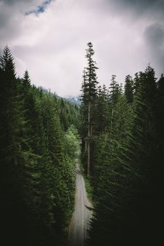 forest #forest #woods #trees #clouds #road #birds eye view #great outdoors