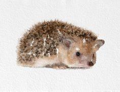Hedgehog Painting #hedgehog #watercolor