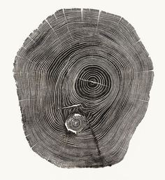 4 | Beautiful Photos Of Tree Rings Remind Us To Slow Down A Little | Co.Exist: World changing ideas and innovation