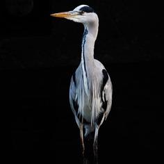 #eye_spy_birds: Beautiful Birds Photography by Dan Gibson