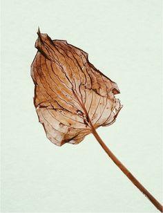 vsco #leaf
