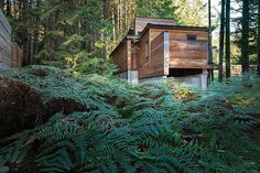 Rainforest Retreat on the Coast of Vancouver Island 3
