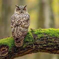 #birdsofinstagram: Incredible Bird Photography by Warren Price