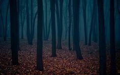 FFFFOUND! | Blog - thirtythr33.de - The Portfolio of Sebastian Bentler #forest