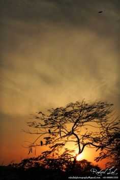 tumblr_lh37erkZ6m1qelai7o1_500.jpg (467×700) #sun #tree #cityscape #lal #india #yellow #delhi #landscape #photography #rahul