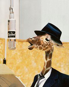 #giraffe #radio