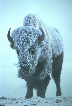 Filth Flarn Filth #bison