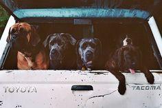Bild 62 #meurle #sarah #dogs #pooches