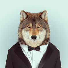 WOLF by Yago Partal for ZOO PORTRAITS