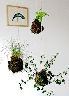 #plants #hanging #kokedama