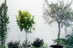 elisa ossino studio : exhibitions/events #grid #green