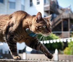 Tagg Pet Tracker #gadget