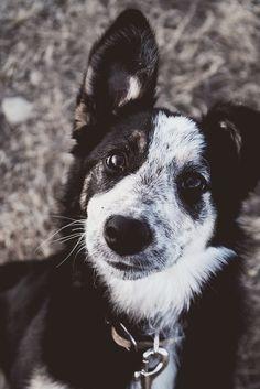(1) Likes | Tumblr #animal #dog