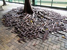 tree-roots-concrete-pavement-1 #root #photography #tree