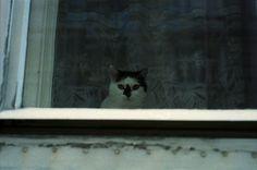 Schaufenster | Triangular Love.