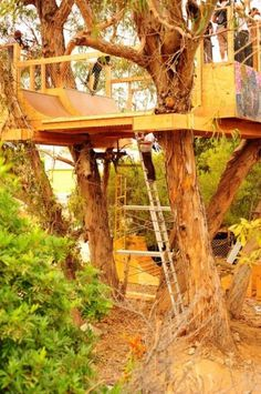 Kitty Cat's Mischief: The Volcom Skate House Tree Ramp #skate #tree #skateboard #ramp #treehouse #volcom