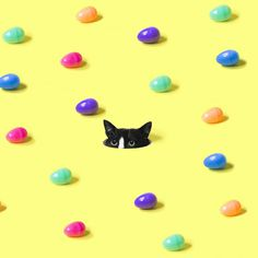 hunt, cat, eggs, yellow