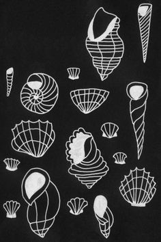 Shells study #illustration #drawing #shell #summer #nature