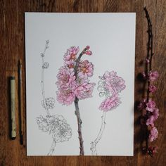 Flowers in Progress | A beautiful series of illustrations by Noel Badges Pugh #ink #pink #wood #illustration #flower