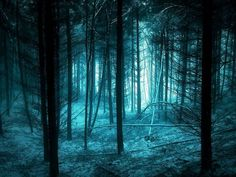 Beautiful Forest Photography