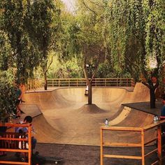 Skatepark in the backyard #skatepark #bmx #photography #trees