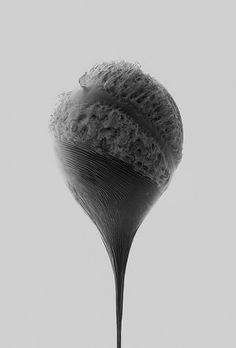 An Abrupt End: Explosive High-Speed Photos by James Huse | Colossal #white #black #speed #balloon #photography #and #high