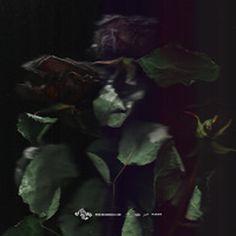 www.corradogrilli.com #corradogrilli #artwork #rose #album #cover #scan # ose