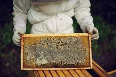 Thirteen Colonies Apiary on Behance #photography
