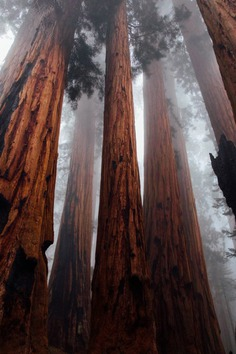 Sequoia National Forest, United States