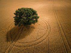 David Hopley - Encompassed, Colton, Tadcaster, North Yorkshire, England