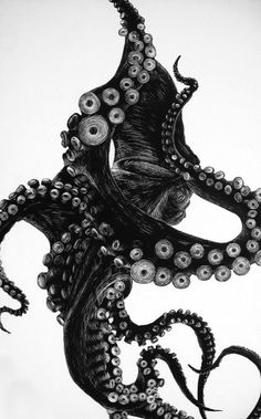 tumblr_m2f7b56wo31qlyc8co1_1280.jpg (638×1024) #illustration #squid #octopus