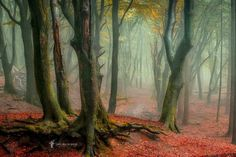Mysterious Nature Photography by Lars van de Goor