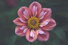 Beautiful Close-Up Flowers Pictures by Lisa Briand