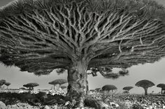 Beth Moon Spent 14 Years Capturing The World's Most Aged Trees