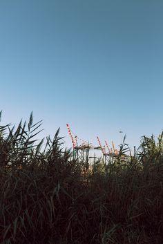 Giraffe | all'orizzonte scorsi una foresta urbana #photography #giraffe #port #red #sky #italy