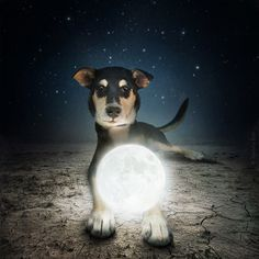 Help Dogs with Images by Sarolta Ban #inspiration #photography #art #fine