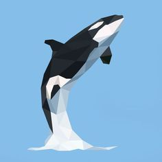Low poly killer whale illustration