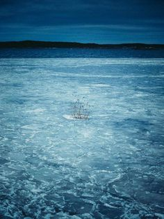 survive #limited #edition #print #sea #gã¶teborg #photography #survive #ice #winter