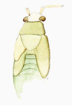 Cornelia Hesse-Honegger #cornelia #bug #insect #honegger #hesse