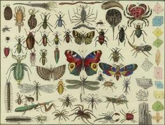 All sizes | Tableau d\\\\'histoire naturelle Annelides, Crustaces, Arachnides, etc, 1834 (detail) | Flickr - Photo Sharing!