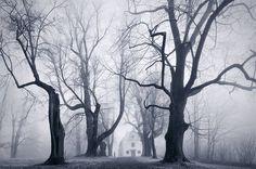 Cloud Forest: Landscape Photos of the Misty Czech Bohemian Forest by Kilian Sch\\xc3\\xb6nbergerDecember 5
